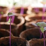 Plant Seedling Sprout Grow Pot  - Mainie / Pixabay